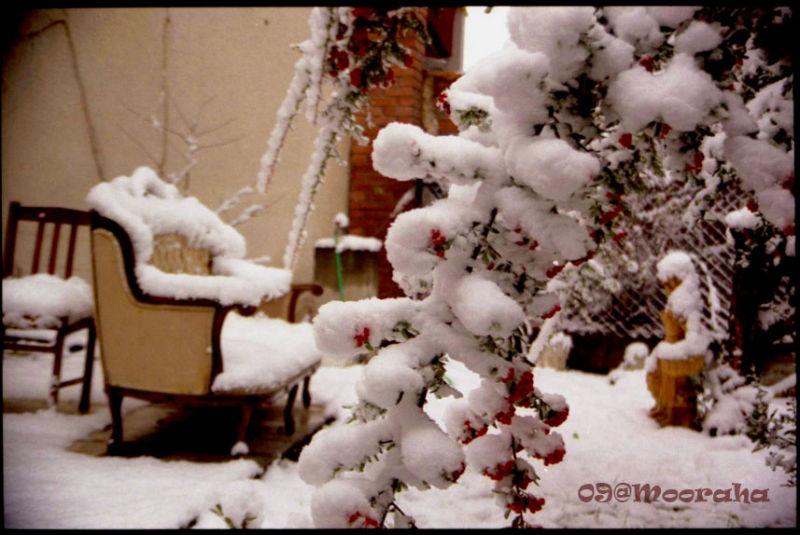 ever red berries snowwhite ankara