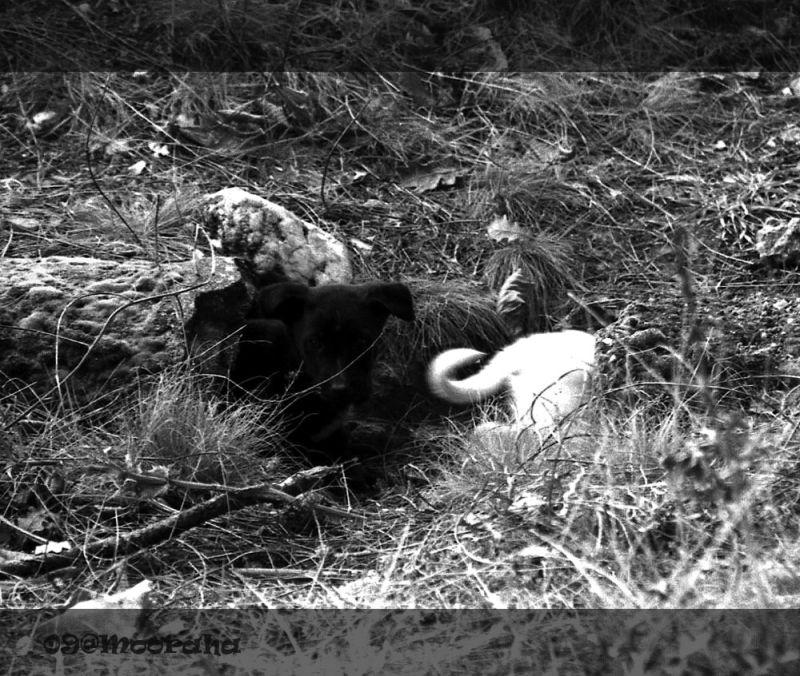 mooraha dog underground forest