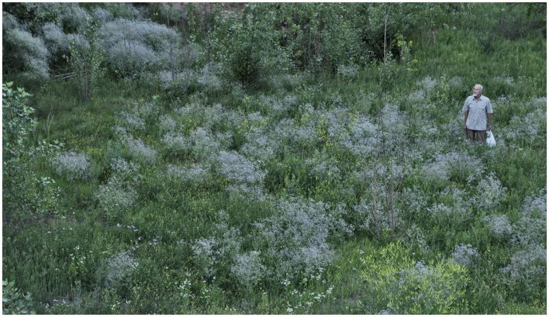 field herbs