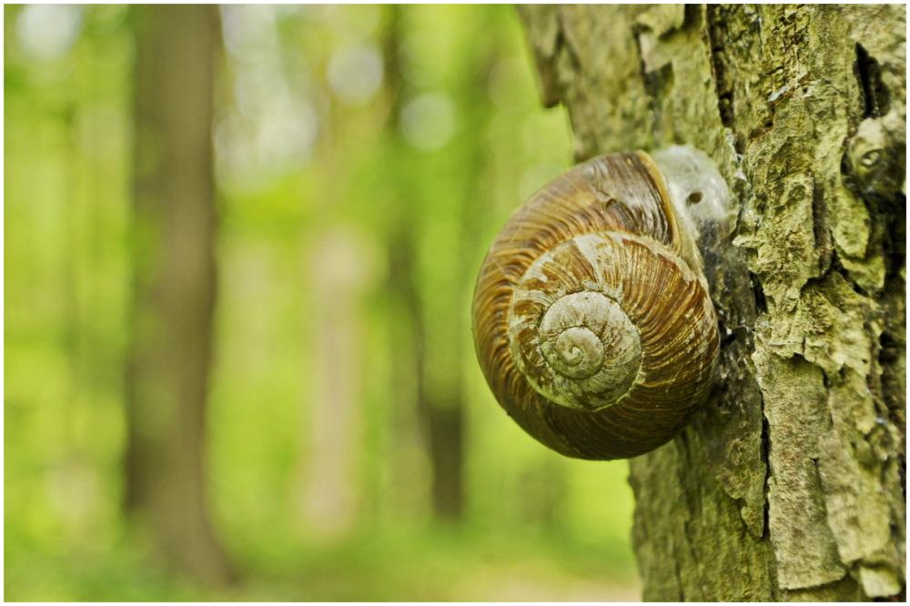 snail kharkiv ukraine