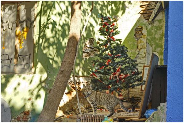 merry cat thessaloniki street greece