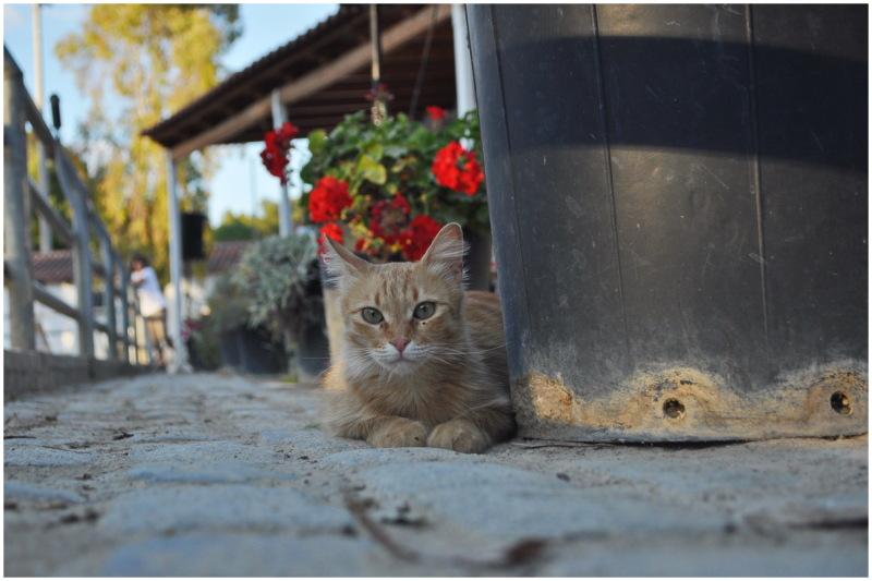 greece cat winter