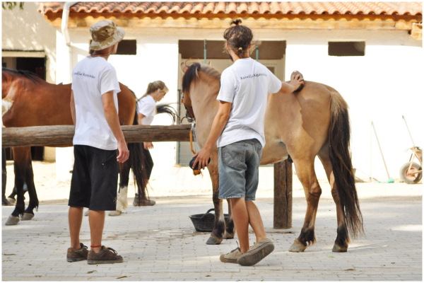 greece horse therapy horse