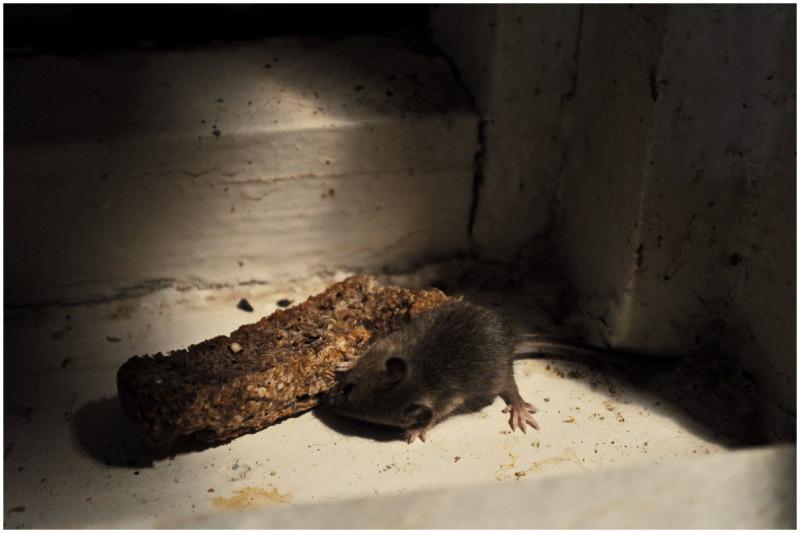 mouse kharkiv ukraine