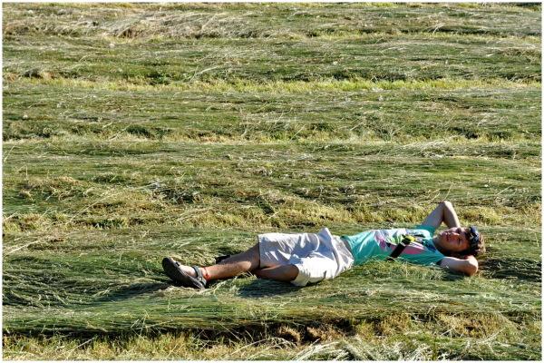 france summer hay