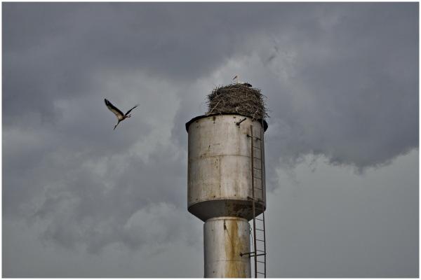 kharkiv ukraine nature stork