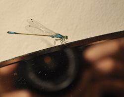 dragonfly ukraine mirror