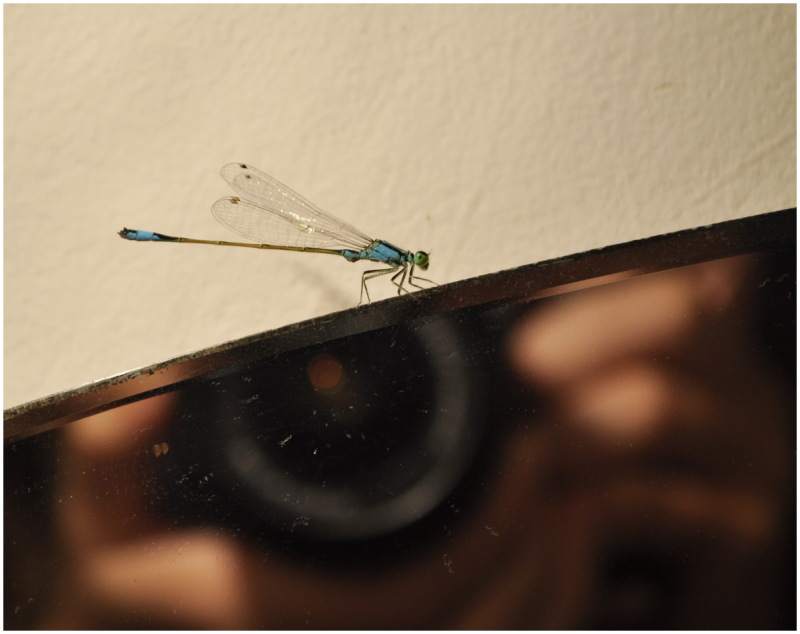 dragonfly ukraine mirror