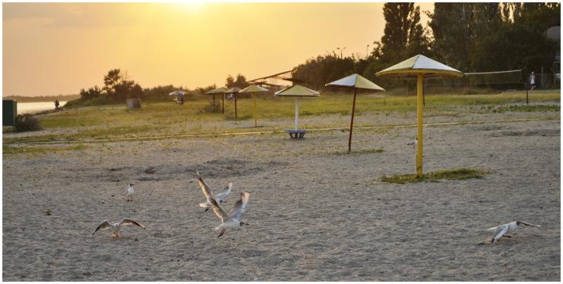 ukraine seagull sea beach