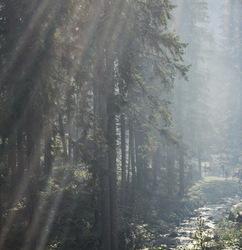 ukraine pylypets carpathians forest mountains