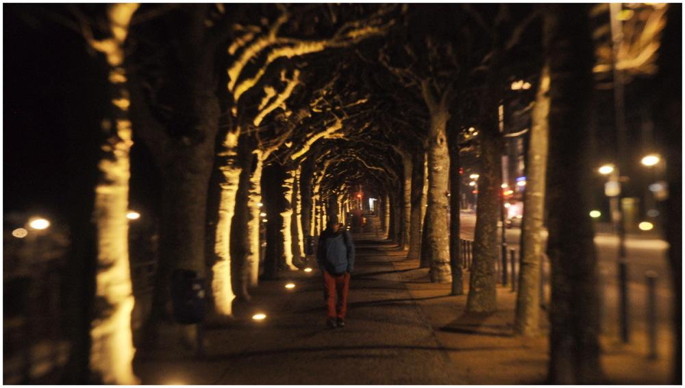 mooraha frankfurt germany night trees