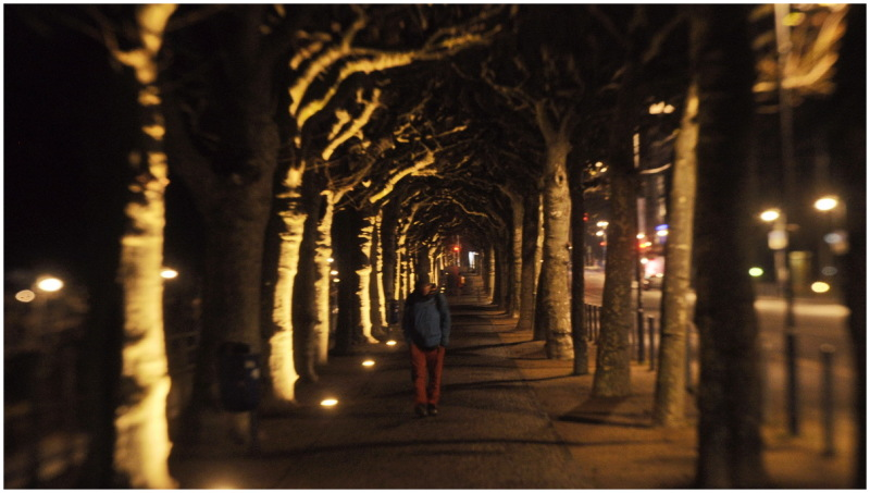 mooraha frankfurt germany night trees
