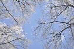 mooraha sky trees