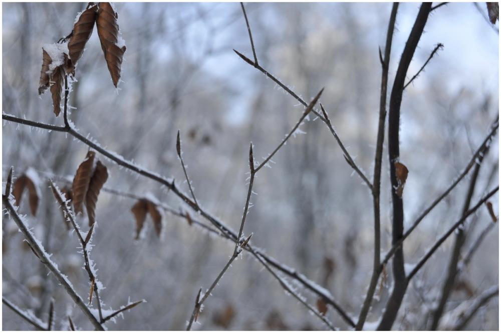 mooraha winter
