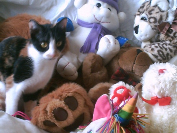 Patches and stuffed animals