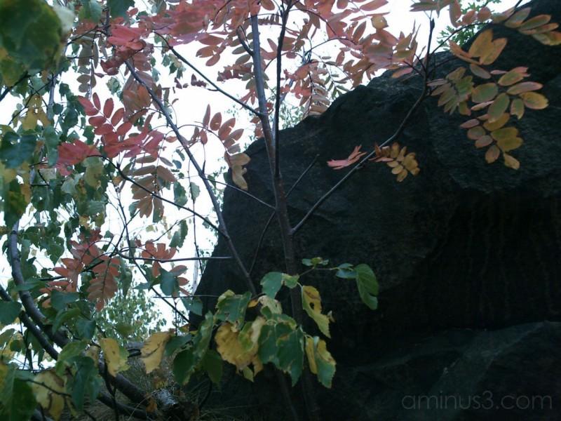 Premature Autumn Colors