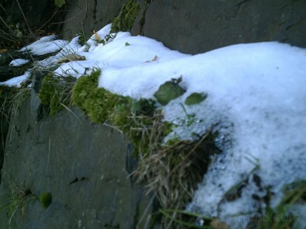 Snowy Mossy Rock Wall Ledge