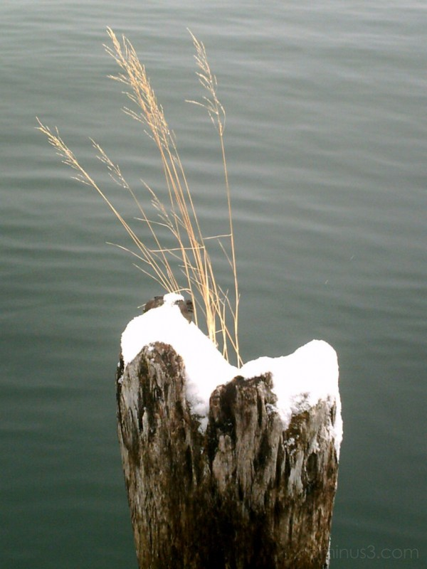 grass, snow, old docks and water