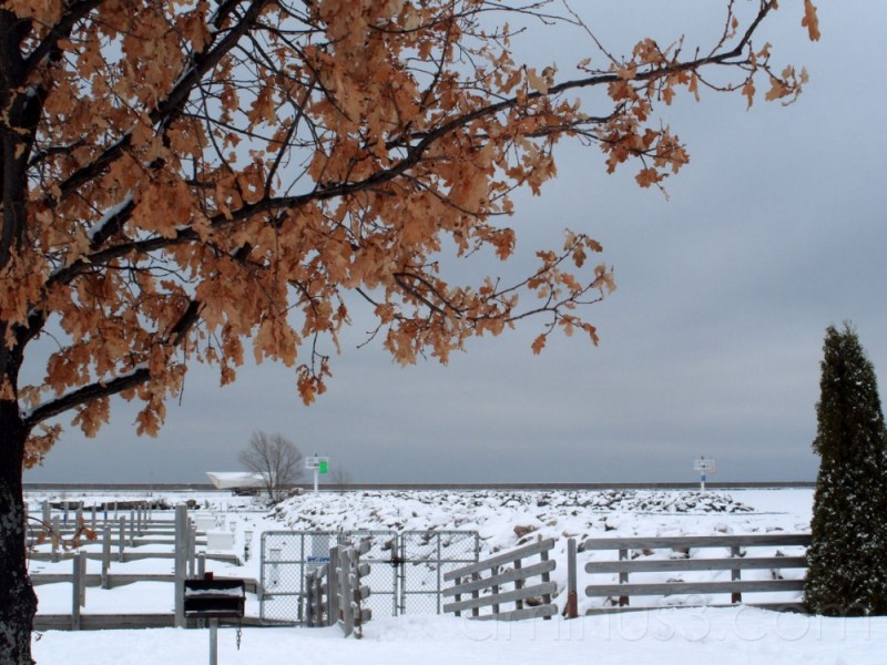 Wintery View