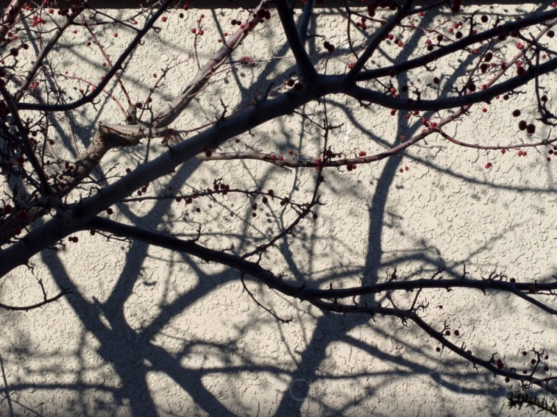 Branches and Shadows