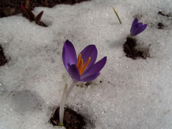 Emerging Spring