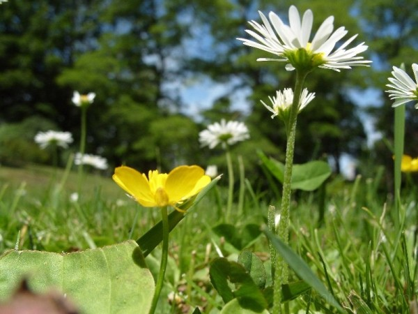 Buttercups and Mini Daisies