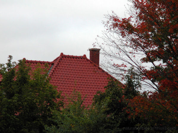 Tiled Roof & Autumn Leaves