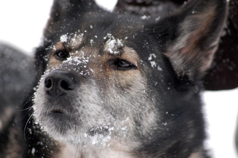 I Smell...SNOW!