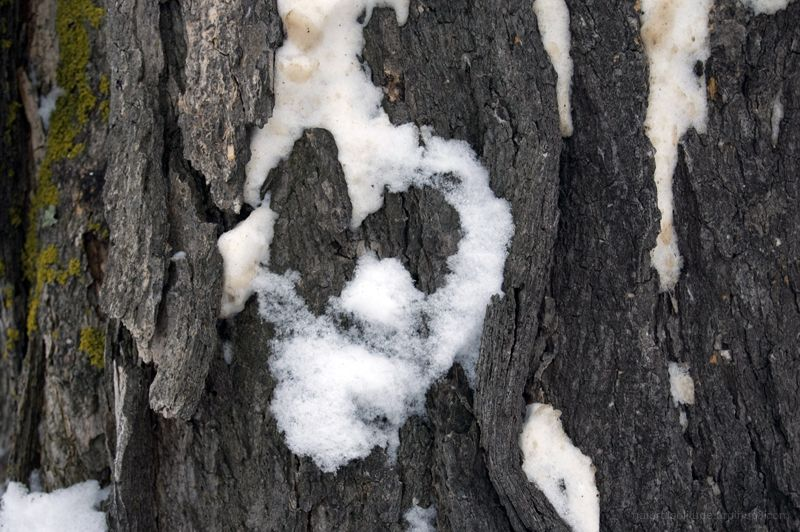 Nature's Valentine