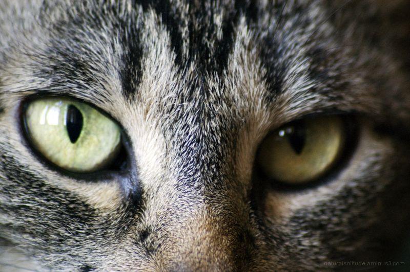 Katie's Eyes