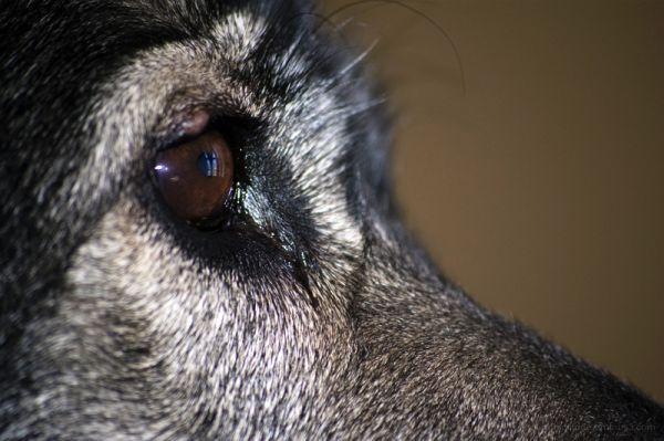 Eye of Ari