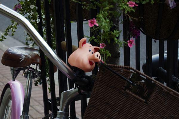 Piggy Bike Ride