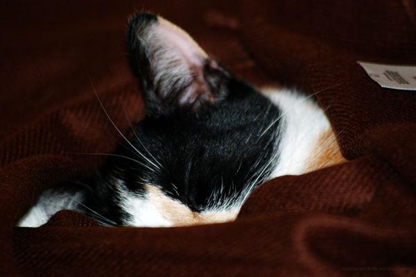 Cashmere Kitty