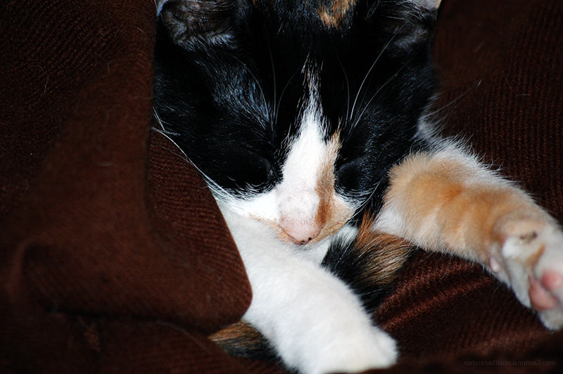 Patches and my...er...HER new blankie