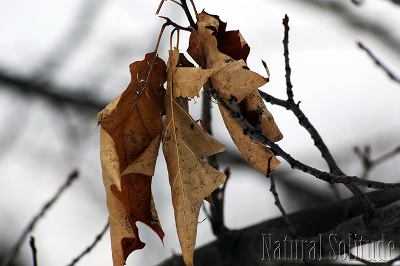 """""""I am the dry, rustling leaves . . ."""""""