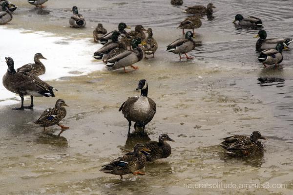 duck, duck, duck . . .not docks
