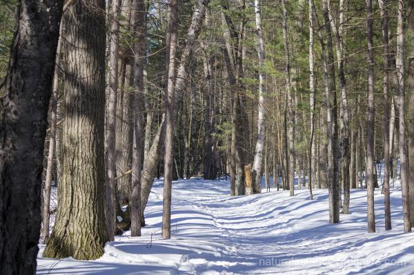 winter hiking presque isle