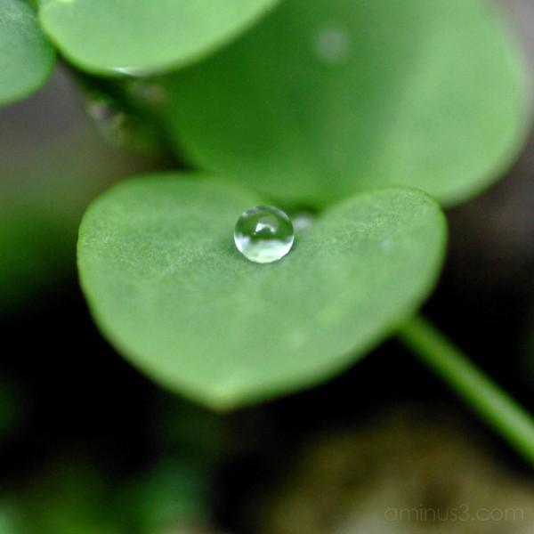 Drop of water on leaf