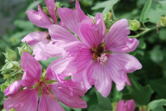 Fleur et intrus