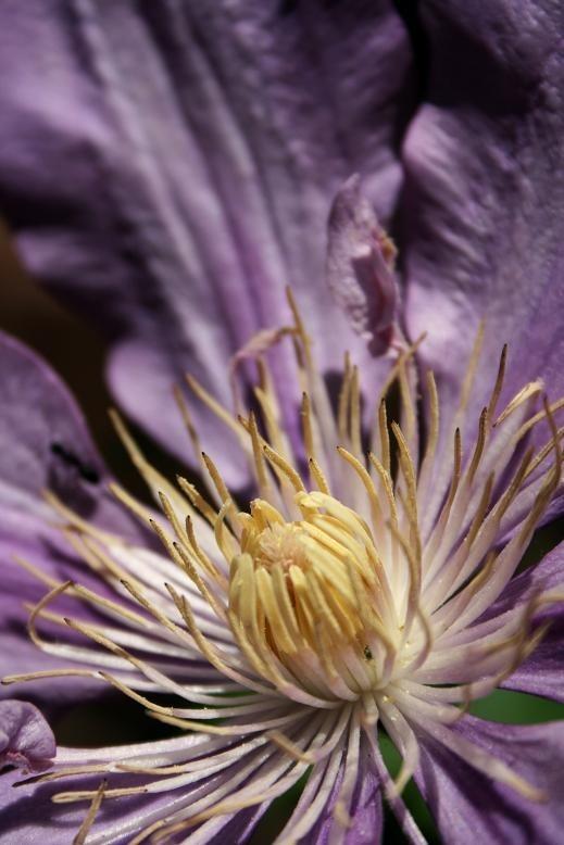 Large purple flower.