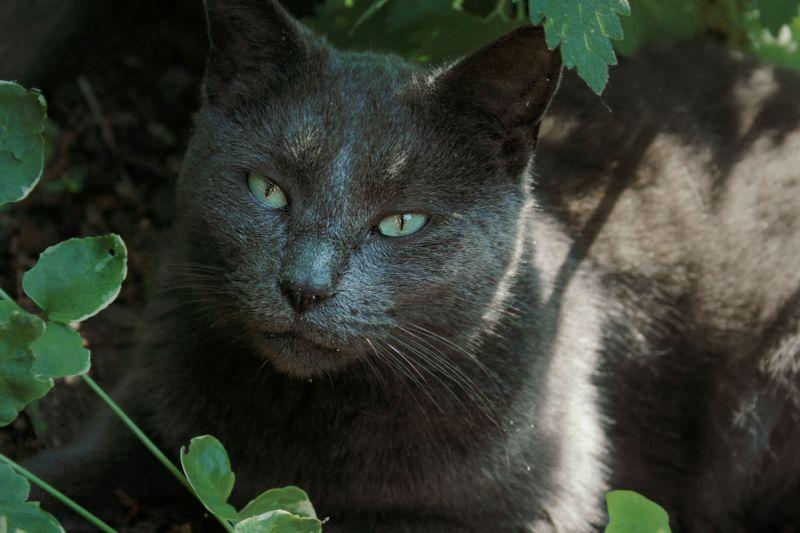 My cat in catnip