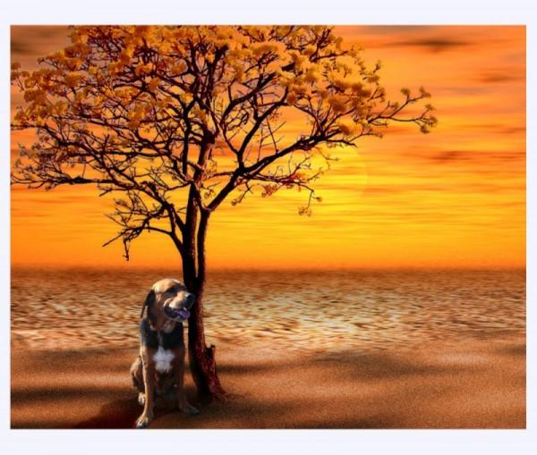 dog rendering