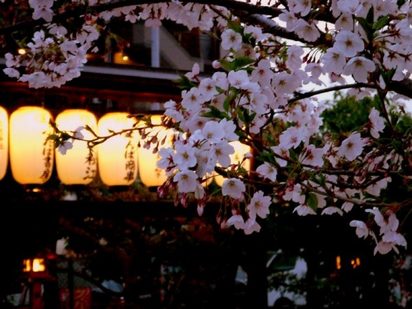 Cherry blossoms Ⅹ