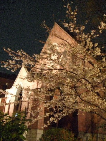 Cherry blossoms at night Ⅰ