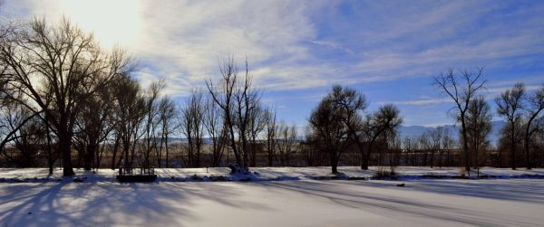 Willow Springs after the freeze.