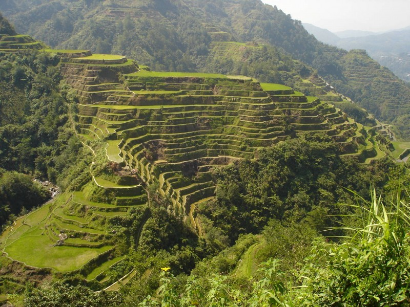 The Famous Rice Terraces