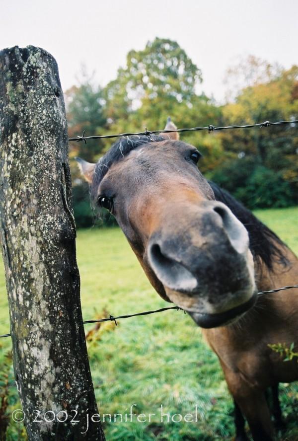 brown horse photo Beech Mountain, North Carolina