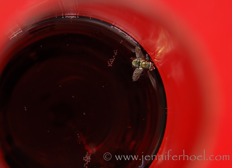phot of a fly in a glass of sparkling shiraz