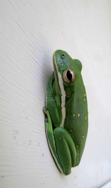 frog on the wall