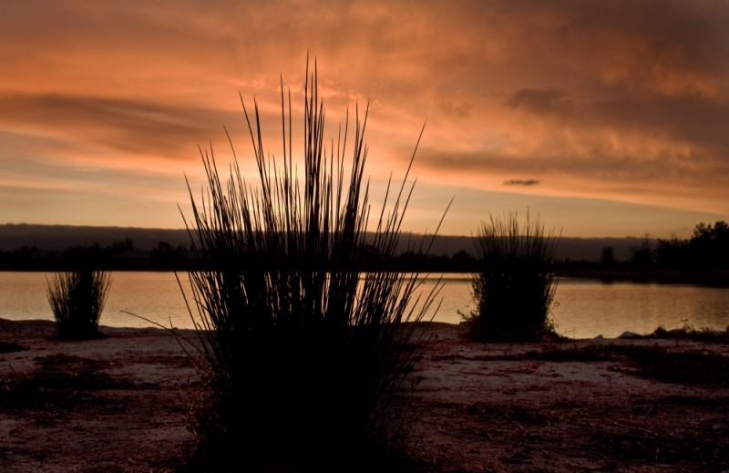 An evening at shoreline